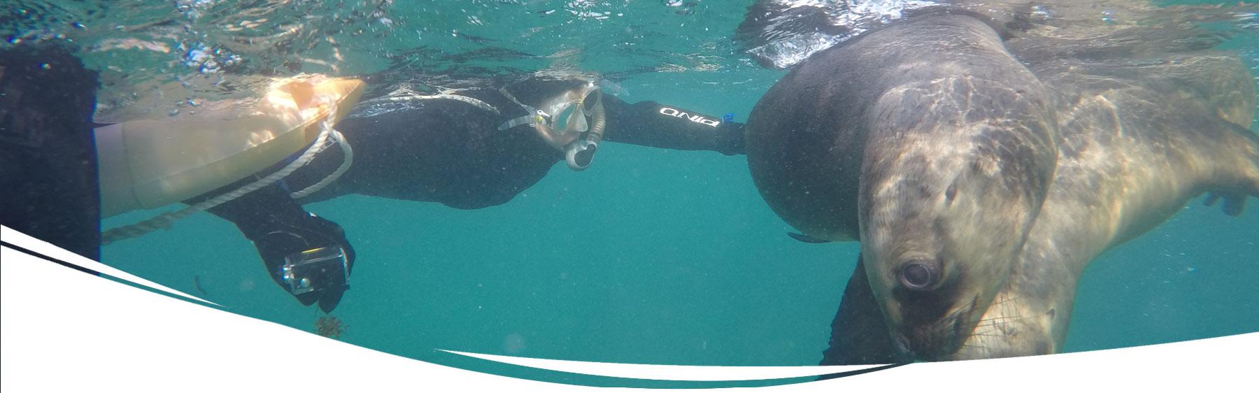 Buceo con Lobos Marinos