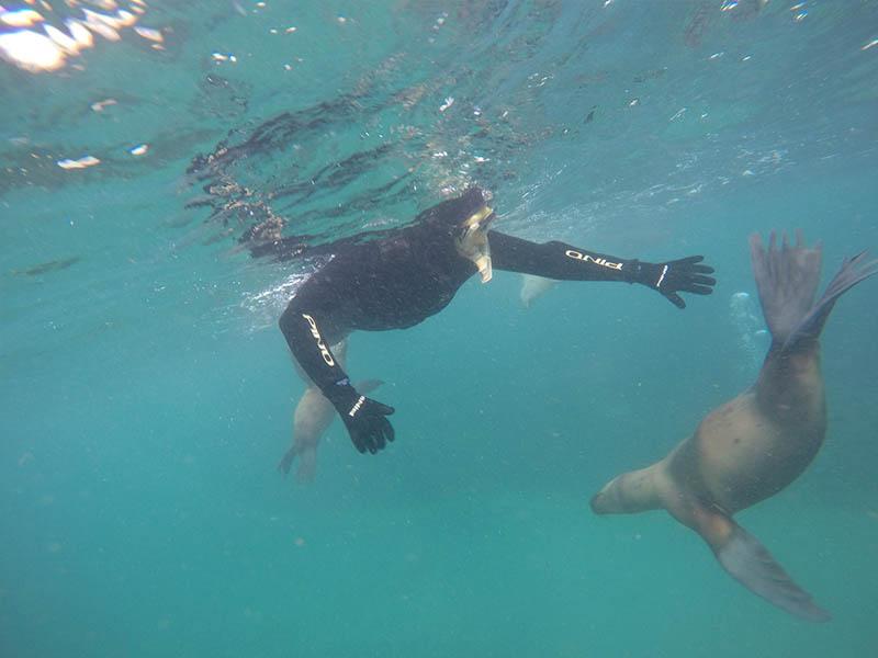 Snorkel  con lobos Marinos en Puerto Madryn