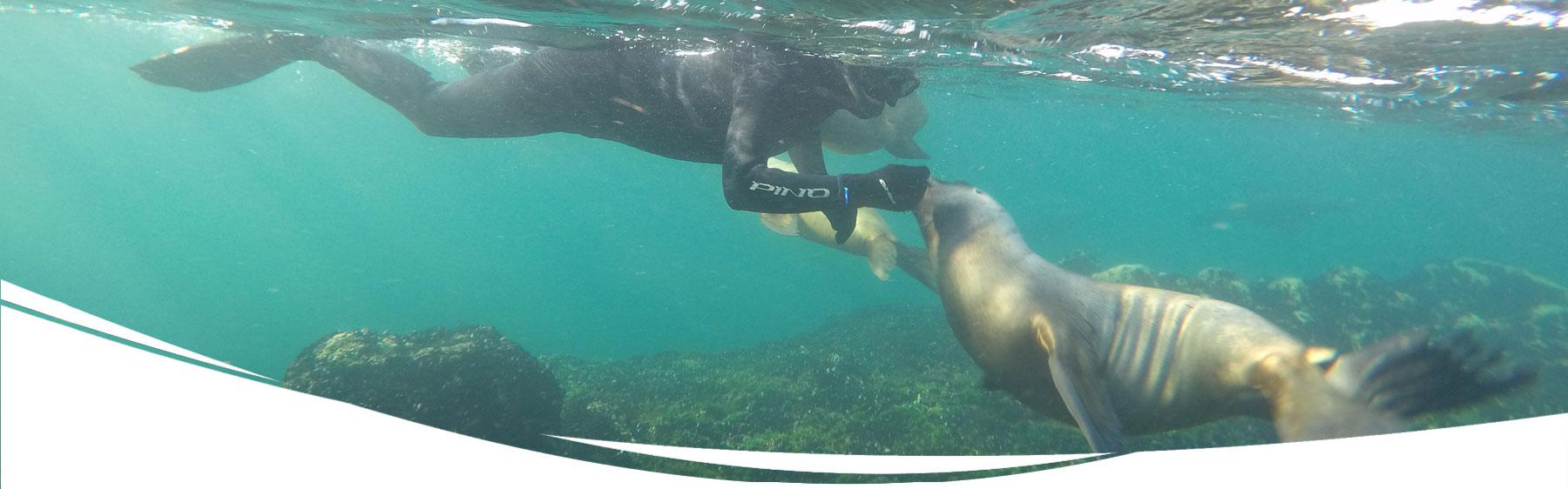 Snorkel con Lobos Marinos